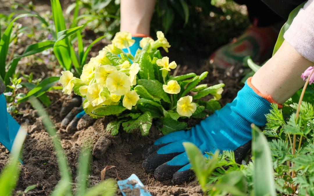 Raus in die Natur – so bleiben die Hände bei der Gartenarbeit gesund