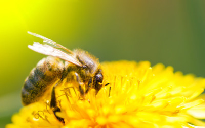 Insektengiftallergie erkennen und behandeln