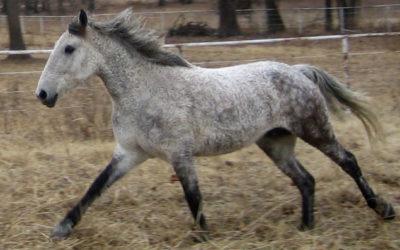 Pferde für Allergiker