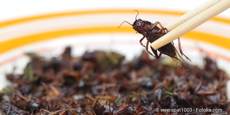 Krabbeltiere auf dem Teller: Trendfood Insekten