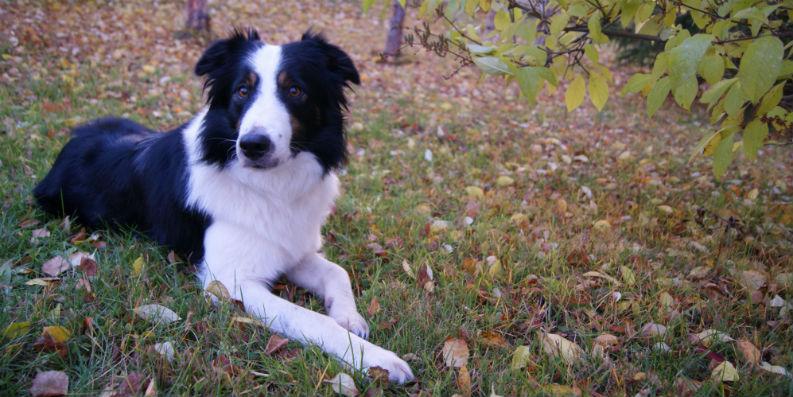 Asthma und Allergien: Auf den Hund gekommen