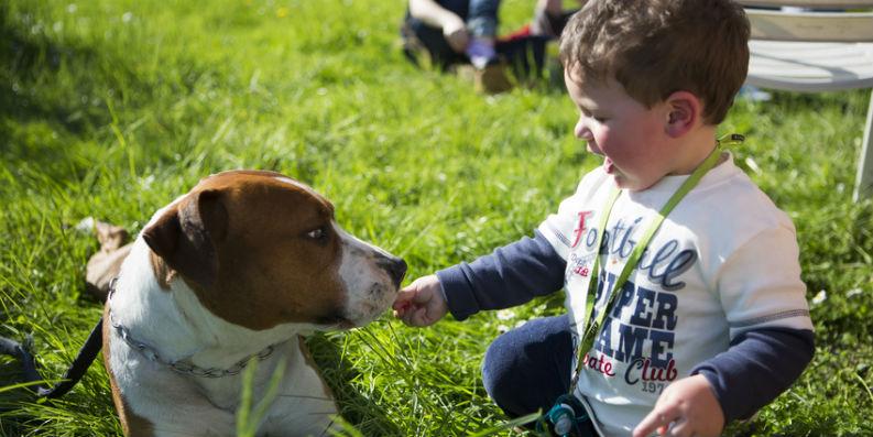 Erhöhtes Atopierisiko durch Hund, Katze und Milbe?