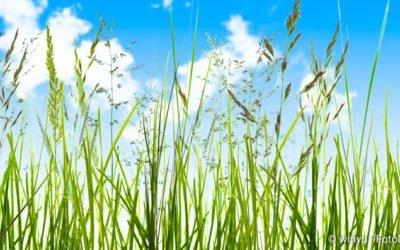 Gefahren für Allergiker im Sommer