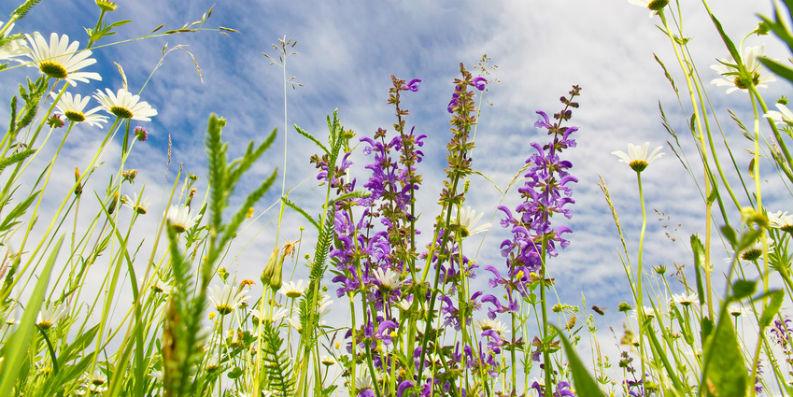 ePIN – das weltweit erste elektronische Polleninformationsnetzwerk